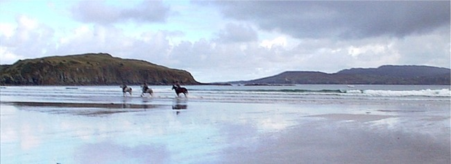 Horses on the beach at Sheephaven bay, County Donegal, Ireland